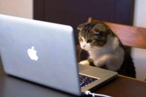 кот смотрит видео
